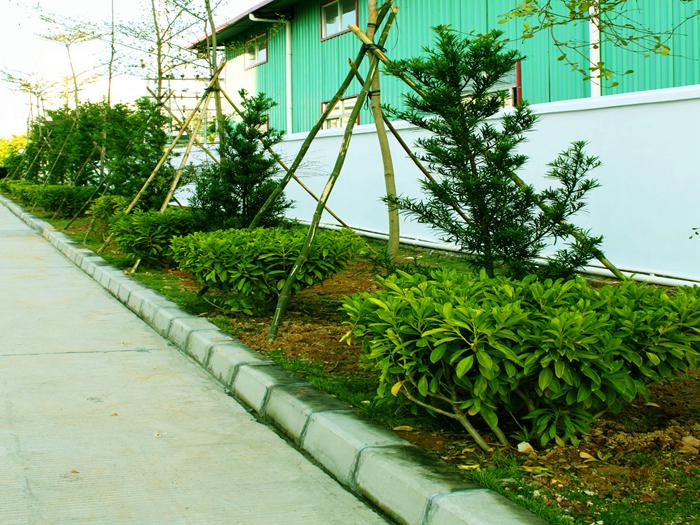 国塑实业厂区绿化
